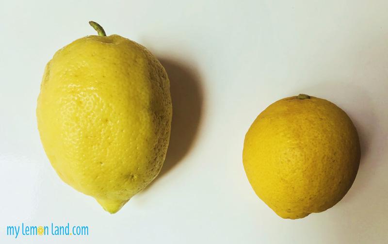 Limone-di-Sorrento-vs-limone-comune