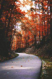 Strada-in-autunno