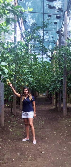 alberi di limone di sorrento_pagliarelle